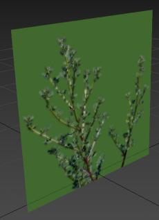 plant_003-screenshot